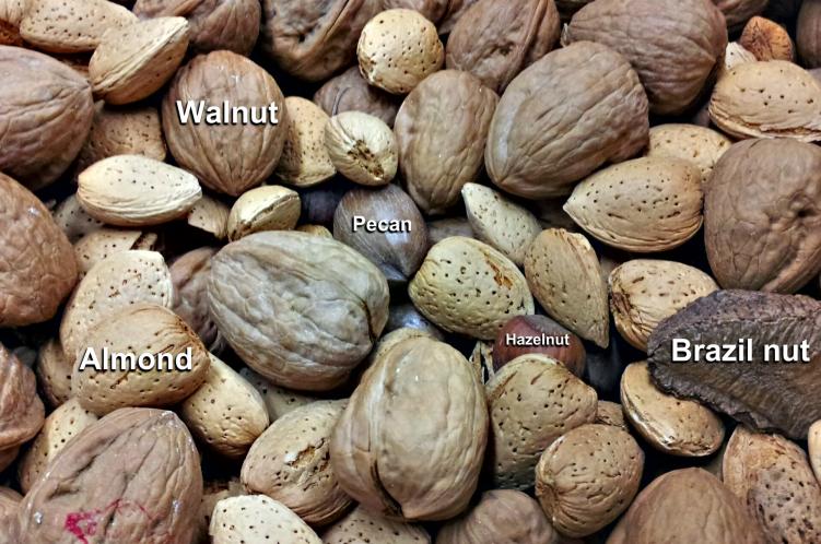 nuts walnut almond pecan hazelnut brazil nut HHO